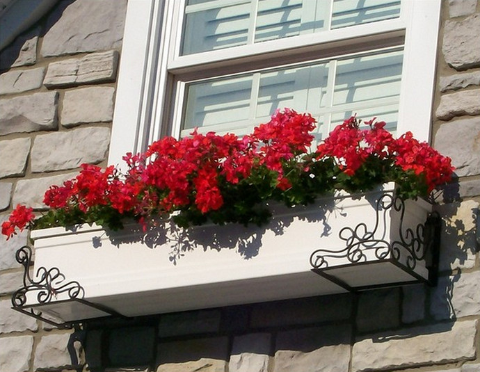 best window box flowers