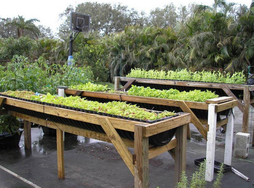 elevated vegetable garden beds