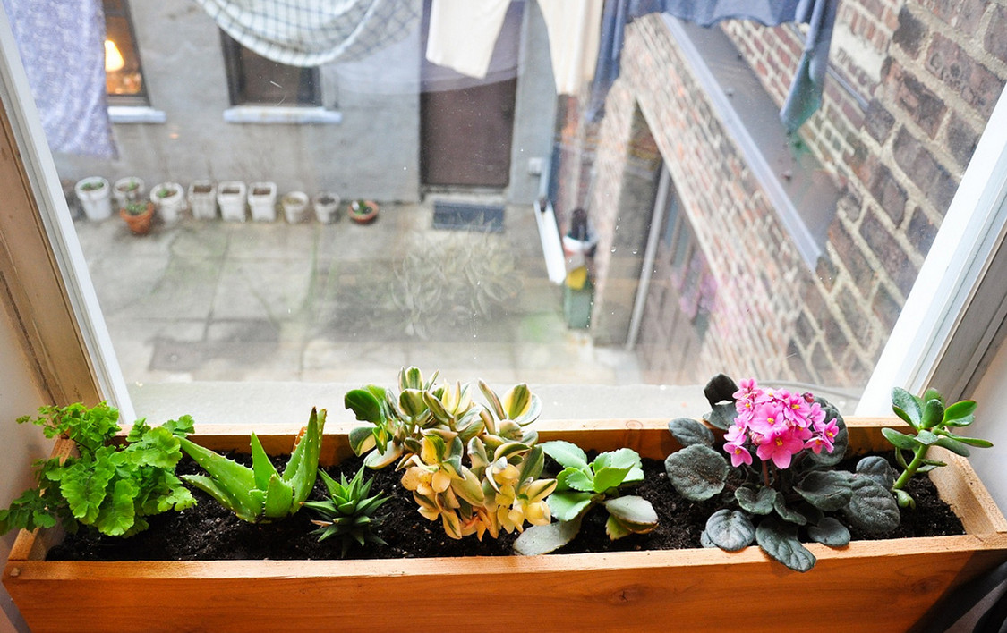 indoor window box decorating