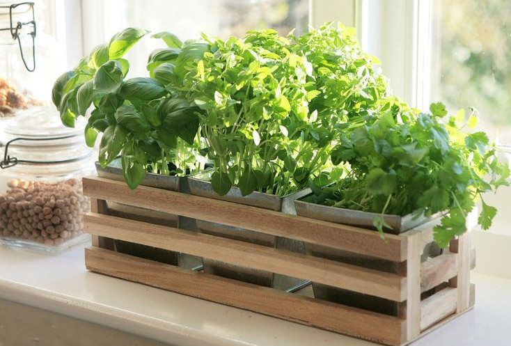 Indoor Window Garden Box Interior Design Ideas