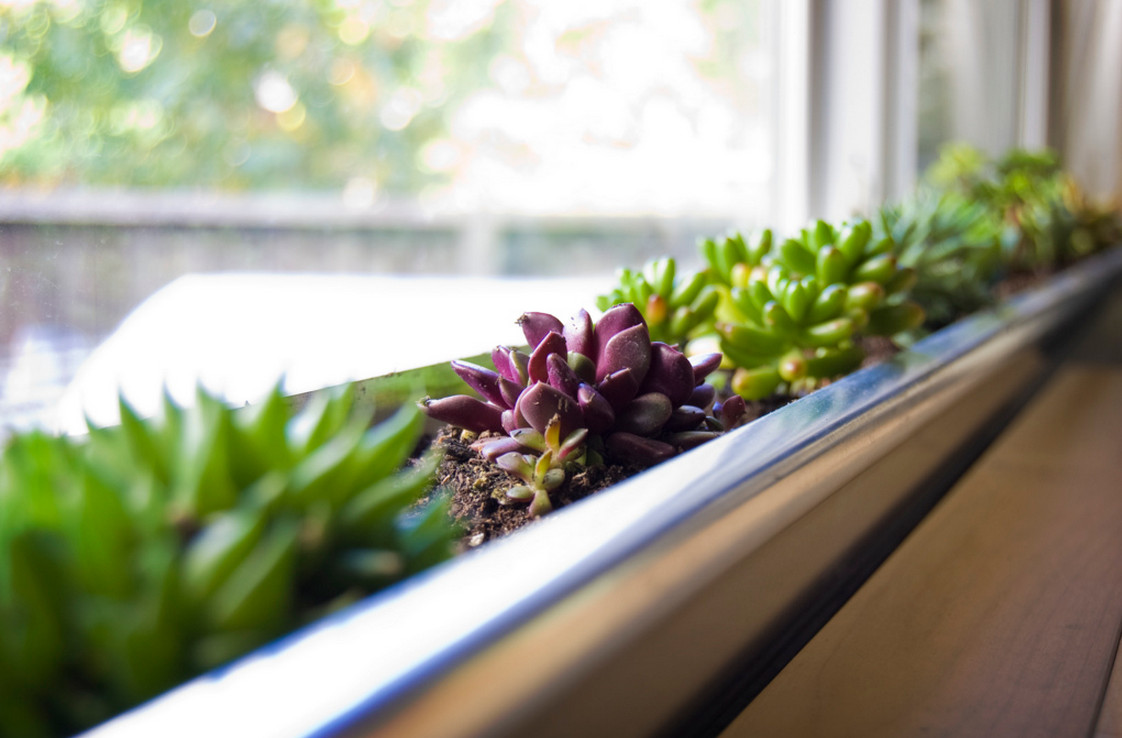 indoor window box ideas
