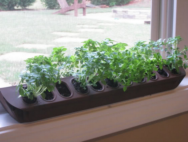 indoor window box vegetables