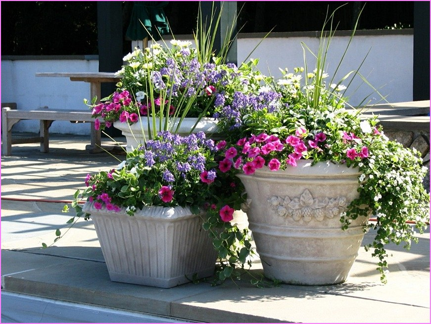 Best Home Design Ideas big flower pots