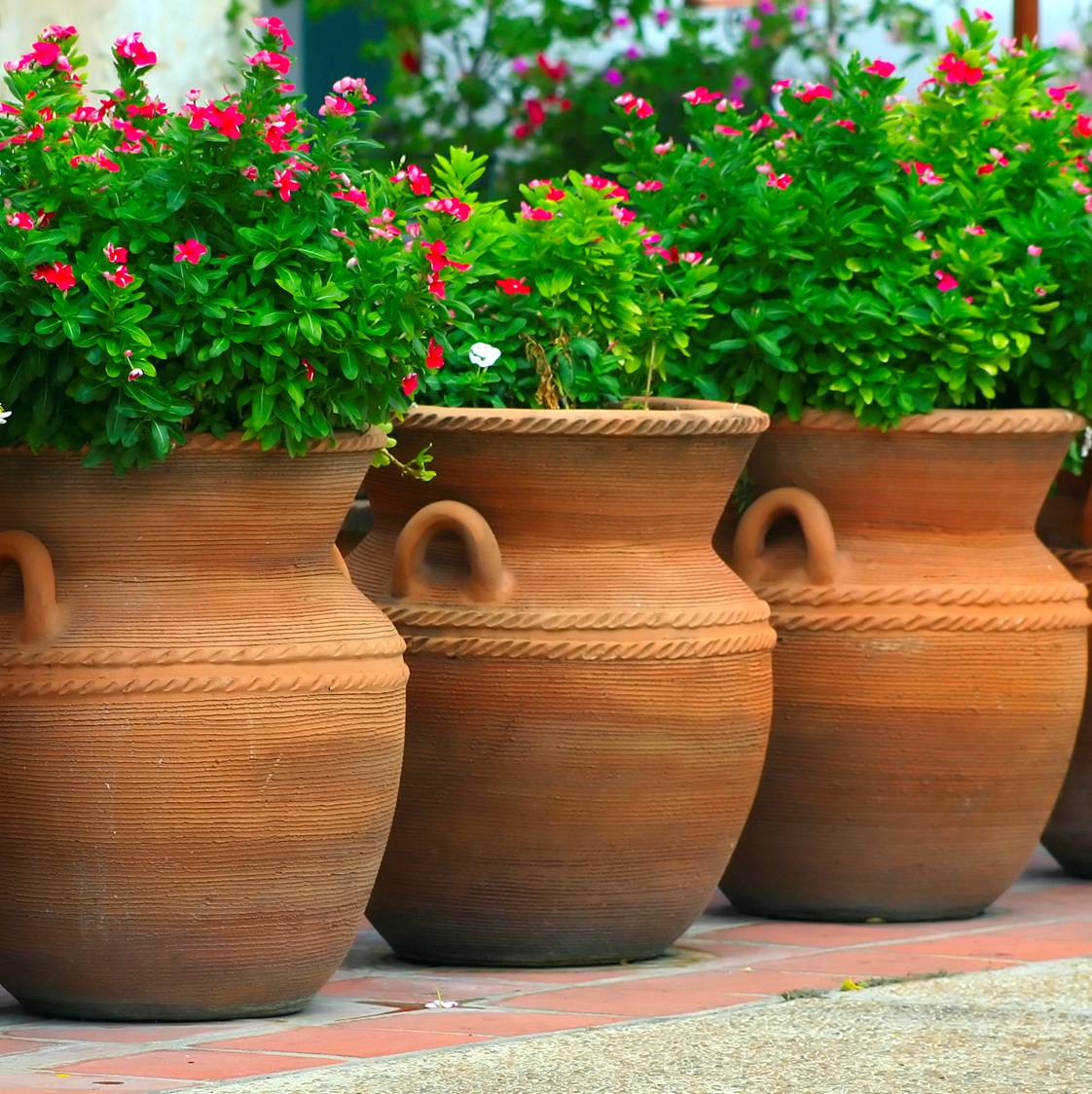 Plant Nursery Flower Pots