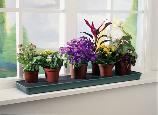 windowsill planter ideas