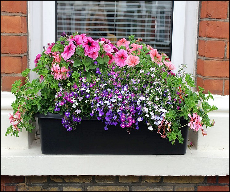 window sill planter